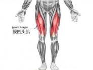 几个小动作延长你的膝关节寿命